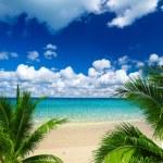 Tropical sea — Stock Photo #28711661