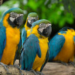 Macaw bird — Stockfoto #30833477