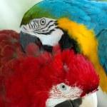 Parrots — Stock Photo #31096449