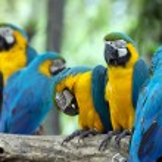 Parrots — Stock Photo #31097215