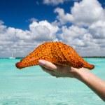 Starfish in hand — Stock Photo #31200931