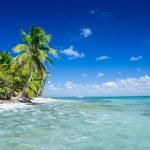 Tropical beach — Stock Photo #31200973