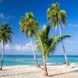 Tropical beach — Stock Photo #31201189