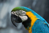 Parrot bird — Stock Photo