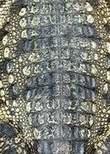 Tekstury skóry krokodyla — Zdjęcie stockowe
