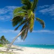 Tropical beach — Stock Photo #31806793