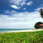 Tropical sea — Stock Photo #31807857
