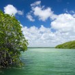 Mangrove trees in sea — Stock Photo #31825015