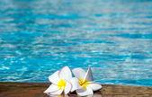 Flower on swimming pool — Stock Photo