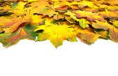 Herbst blätter — Stockfoto