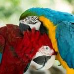 Постер, плакат: Parrots