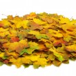 Autumn leafs — Stock Photo #33662455