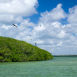 Mangrove trees in sea — Stock Photo #33662571