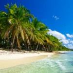 Tropical sea — Stock Photo #34167965