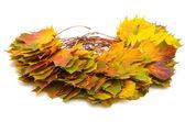 Autumn leafs — Stock Photo