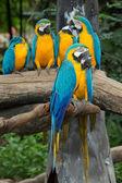 Parrot bird — Stock Photo