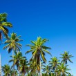 Palm tree — Stockfoto #34881655