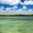 Mangrove trees in sea — Stock Photo