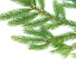 Fir tree branches — Stock Photo #34920247