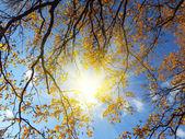Sfondo autunno — Foto Stock