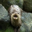 Otter in the Zoo — Foto de Stock