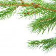 Fir tree branches — 图库照片