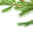 Fir tree branches — Stock Photo #36471201