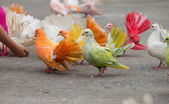 Pigeons — Foto de Stock