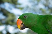 Parrot — Stockfoto