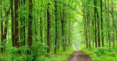 Grün wald — Stockfoto