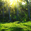 Tropical forest — Stock Photo #40726229