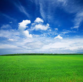 Field on a background of the blue sky — 图库照片