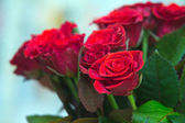 Close-up of a beautiful bouquet of red roses — Stock Photo