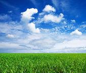 Campo estivo verde — Foto Stock