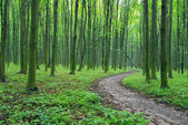 Pathway in wood — Stock Photo