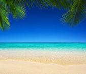 тропическое море — Стоковое фото