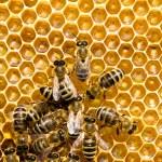 API su honeycells — Foto Stock #47498287