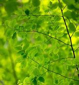 Natürlichen grünen Hintergrund — Stockfoto