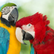 Macaws parrots — Stock Photo #49812973
