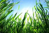 зеленый газон — Стоковое фото