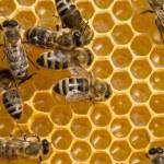 API su honeycells — Foto Stock #50384733