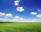 Fältet på en bakgrund — Stockfoto