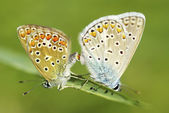 Dva motýli — Stock fotografie
