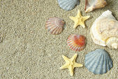 Starfish and shells — Foto de Stock