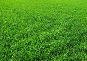 çim sahası — Stok fotoğraf