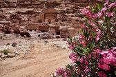 Petra ürdün — Stok fotoğraf