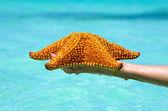 étoile de mer dans la main — Photo