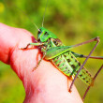 Locust — Stock Photo #1009333