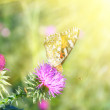 Butterfly — Stock Photo #1010022