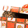 Stock Photo: Funny cat in box isolated on white